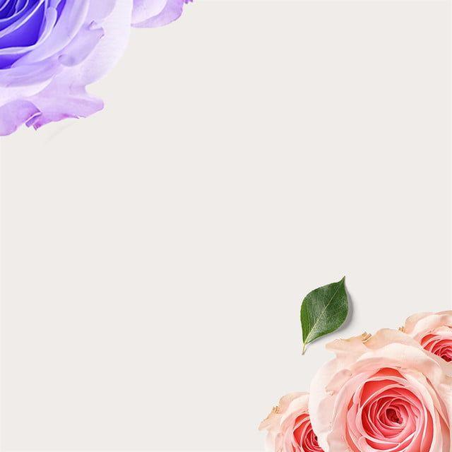 Rose Latar Belakang Minimalis Bunga Ungu Mawar Merah Jambu Frame Border Design Border Design Pictures