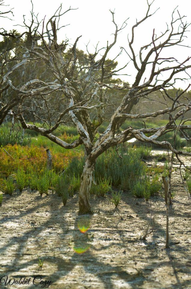 Swamp tree :) Bremer Bay, Western Australia