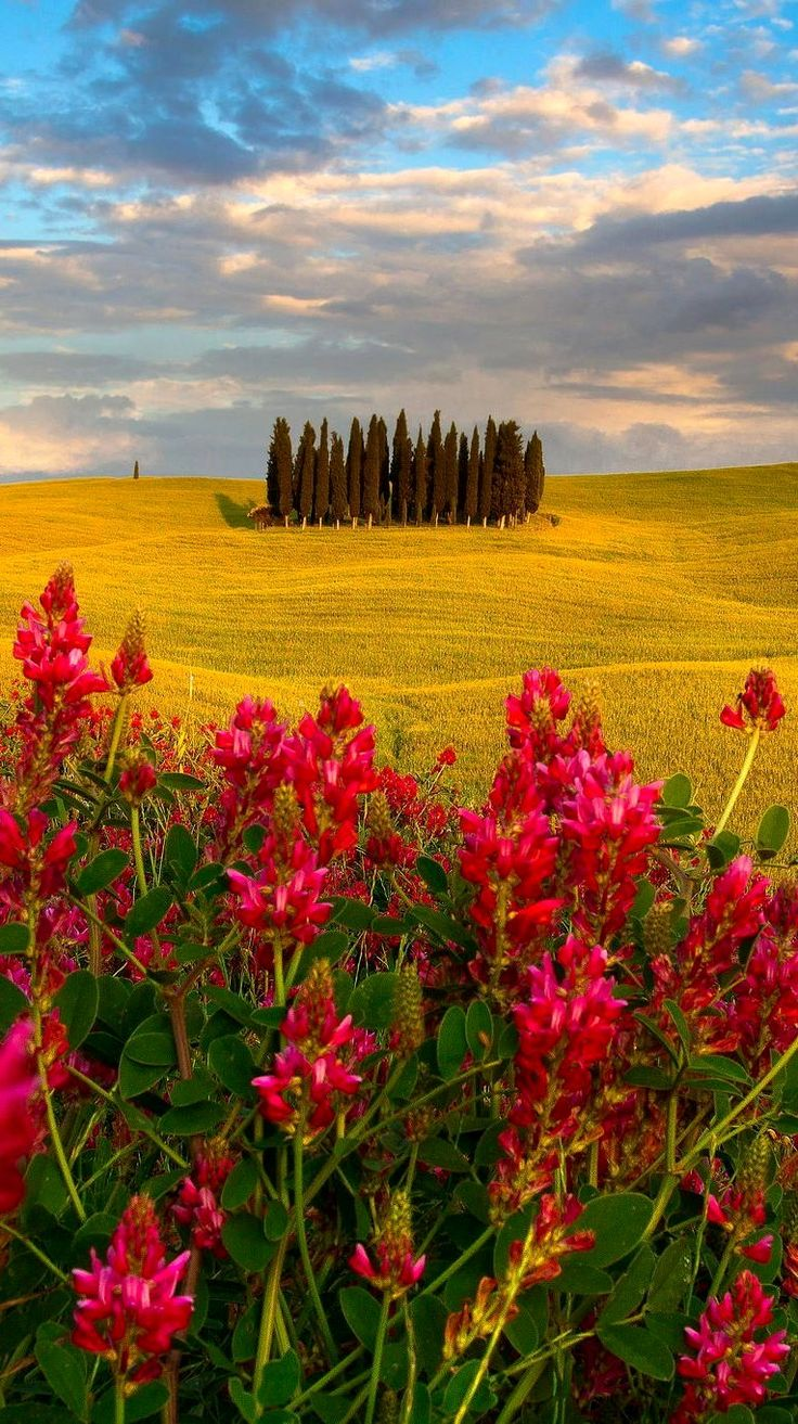 Colours of Tuscany, Italy | by Simone Panzeri on 500px...✈...