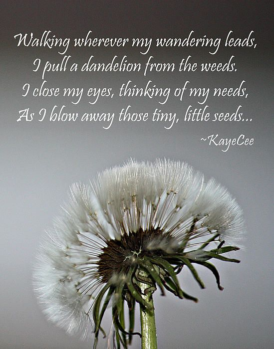 Dandelion Dreams Fine Art And Poetry Poster By Kayecee Spain