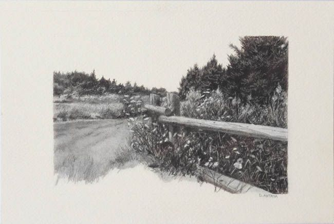 """Denise Antaya - Wildflowers and Pines 6"""" x 4"""" Graphite on Arches"""