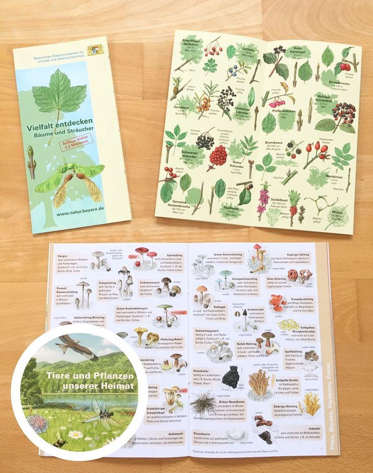 Kostenloses Material zum Thema Wald in der Grundschule (Bäume, Sträucher, Blätter, Früchte, Insekten, Pilze, Pflanzen)