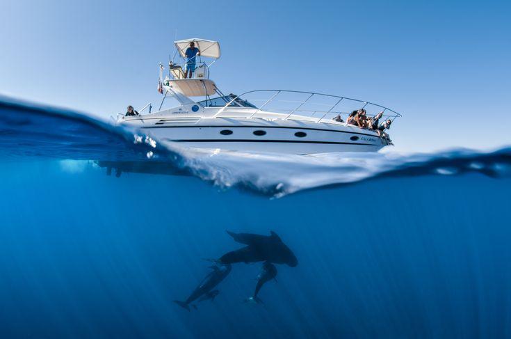 Le bateau Cala Rossa et des Globicéphales sur la même magnifique photo prise par Greg Lecoeur lors d'une de nos sortie pour Nager avec les Dauphins.#globicéphale
