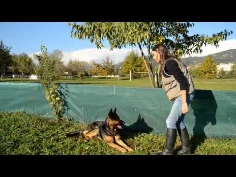 Il terra resta: come insegnarlo in maniera veloce e sicura al nostro cane. - YouTube
