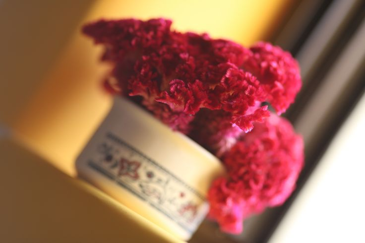 Celosia is an annual plant, known as cockscomb and brain plant.  https://www.youtube.com/watch?v=u2zk2zqC4gM