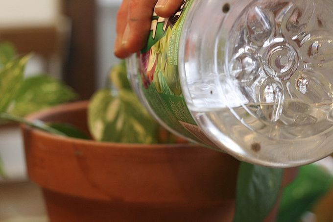 1. Для цветов Для цветов  Вода, в которой варились макароны, очень богата минералами. Комнатные растения скажут тебе только спасибо!