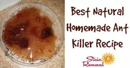Best Natural Aphid Killer