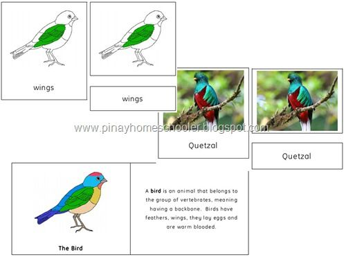 Bird Cards for lessons this spring