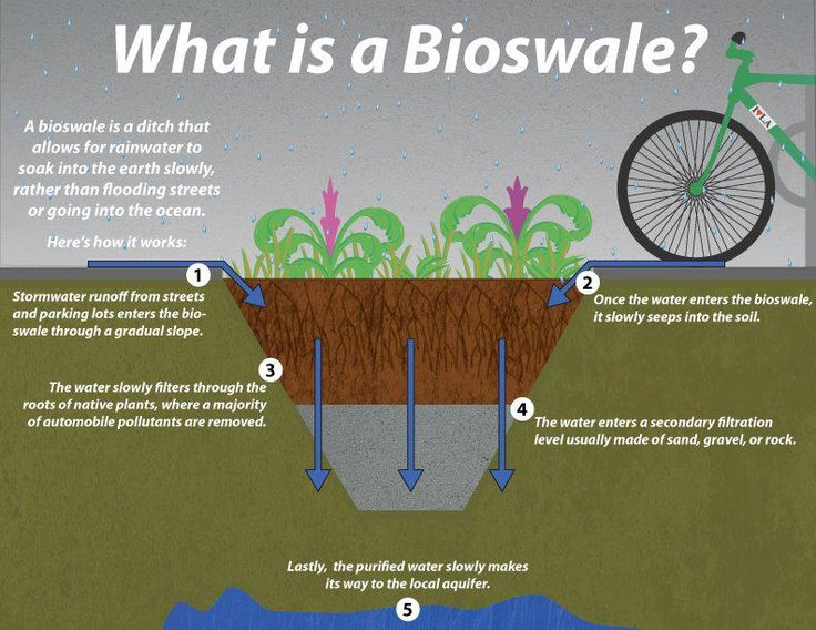 What is a bioswale stormwater mitigation green design for Explanation of rainwater harvesting
