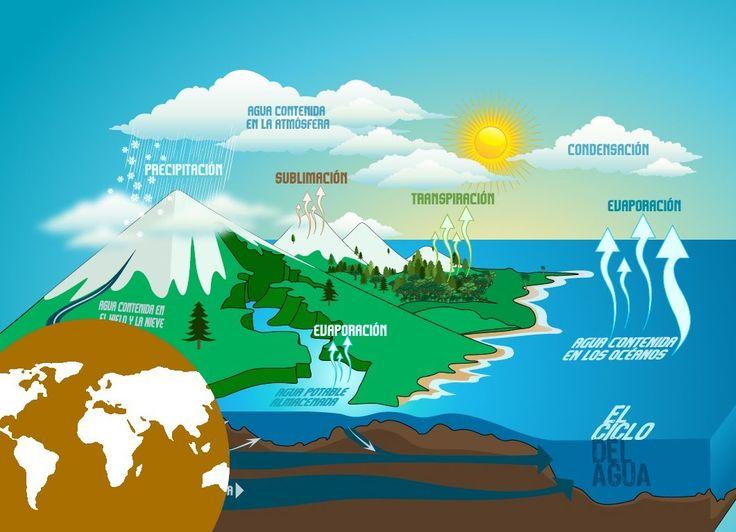 LA HIDROSFERA. Es la parte Oceánica de la biosfera y es mas espaciosa y mas extendida, a partir de una zona con luz (zona eufótica) de algunas decenas de metros, la vida animal se puede mantener hasta las mayores profundidades.