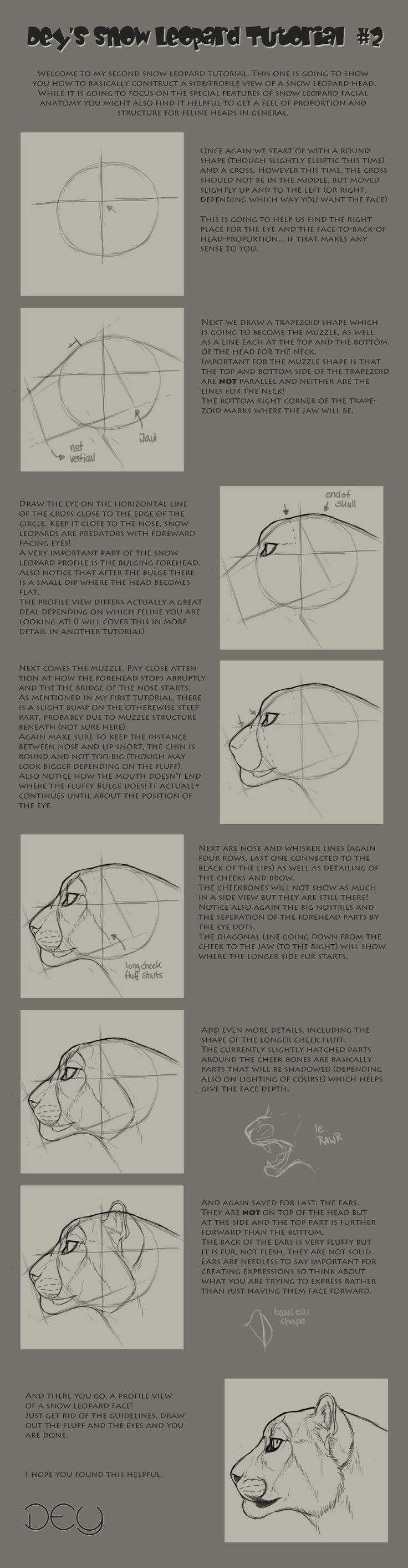 best images about animals wolves cat anatomy again not perfect but as close as i can do it i m sometimes still having trouble getting the forehead ri tutorial snow leopard head