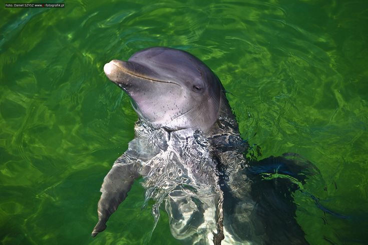 Delfiny na Kubie