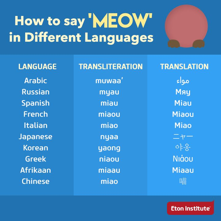 how to say meow in different languages