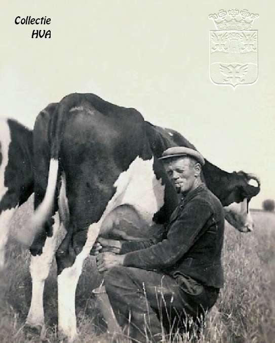 Boer Adraan Baaijens tijdens het melken van de koeien