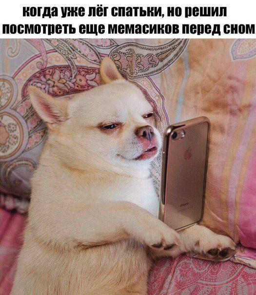 https://telegram.me/LaQeque/23499  #memes #mem #мем #мемы #мемасики