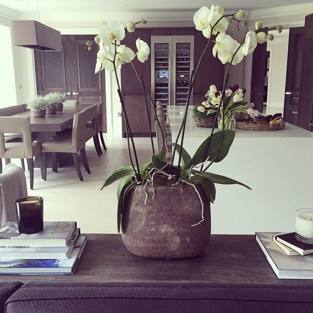 White orchid in a rustic pot is one of my favourite ways to style this console, I change it each week with my @wildwoodlondon deliveries #flowers #kitchen #console #orchid #home #homedecor #interiors #interiorstyling