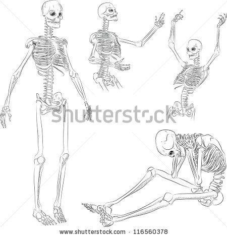 141 best bones images on pinterest | bones, skeletons and human skull, Skeleton
