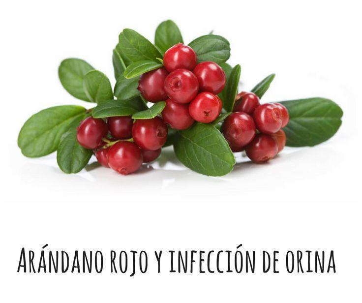 Prevención de la infección de orina con arándano rojo - SexoconSalud sexoconsalud.com