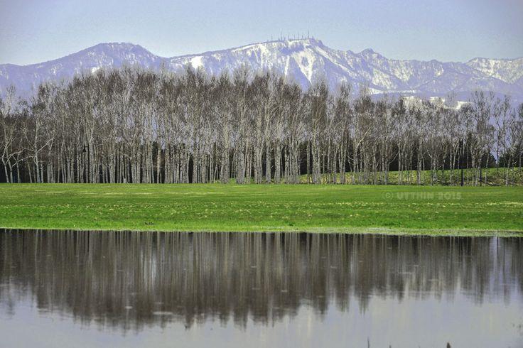 風景写真集 ~北海道の四季~: 白樺の春