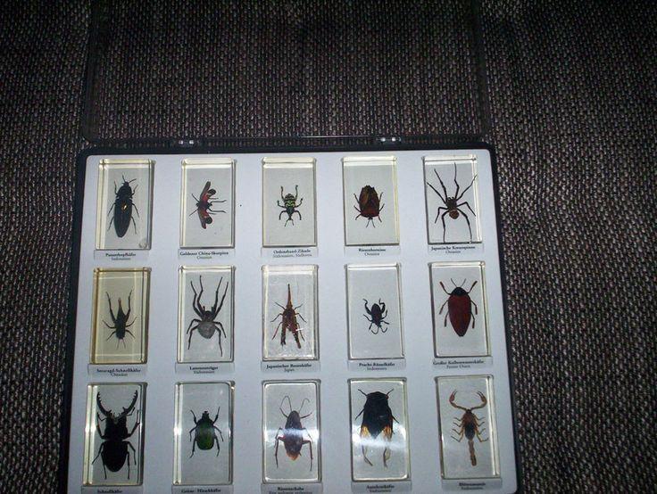 Mini Biester 33 Stück Insekten im Acryl Block 27 Hefte und 2 Leerboxen