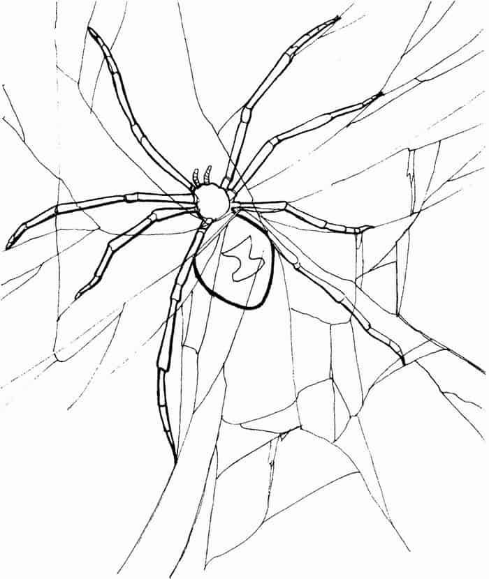 Black Widow Spider Coloring Pages In 2020 Spider Coloring Page Animal Coloring Pages Avengers Coloring Pages