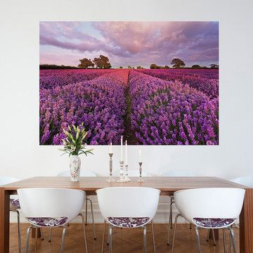 17 Best Ideas About Lavender Walls On Pinterest Lilac