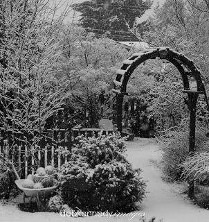 (link) HOMEWARDfound Decor: A Black U0026 White Winter Garden ~ Beautiful  Collection Of
