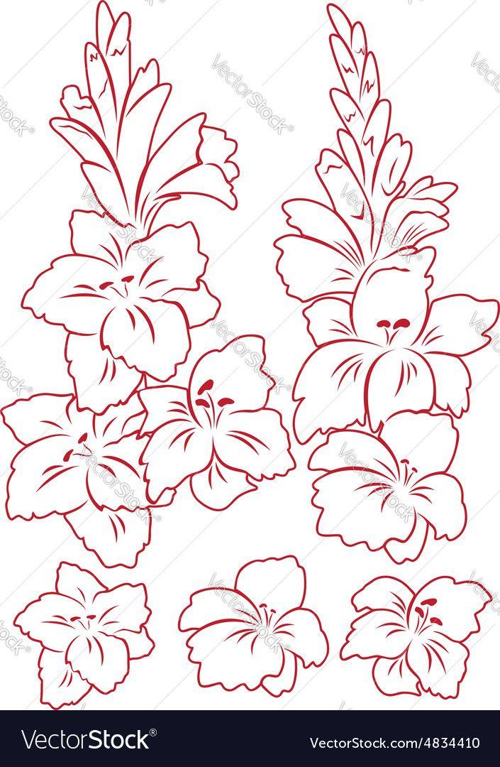 Gladiolus Nouveau Google Search Gladiolus Flower Flower Outline Flower Clipart