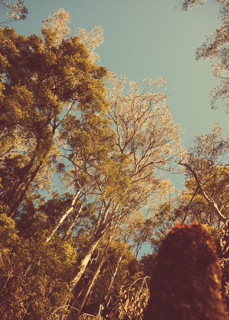 Blue Mountain Range, NSW