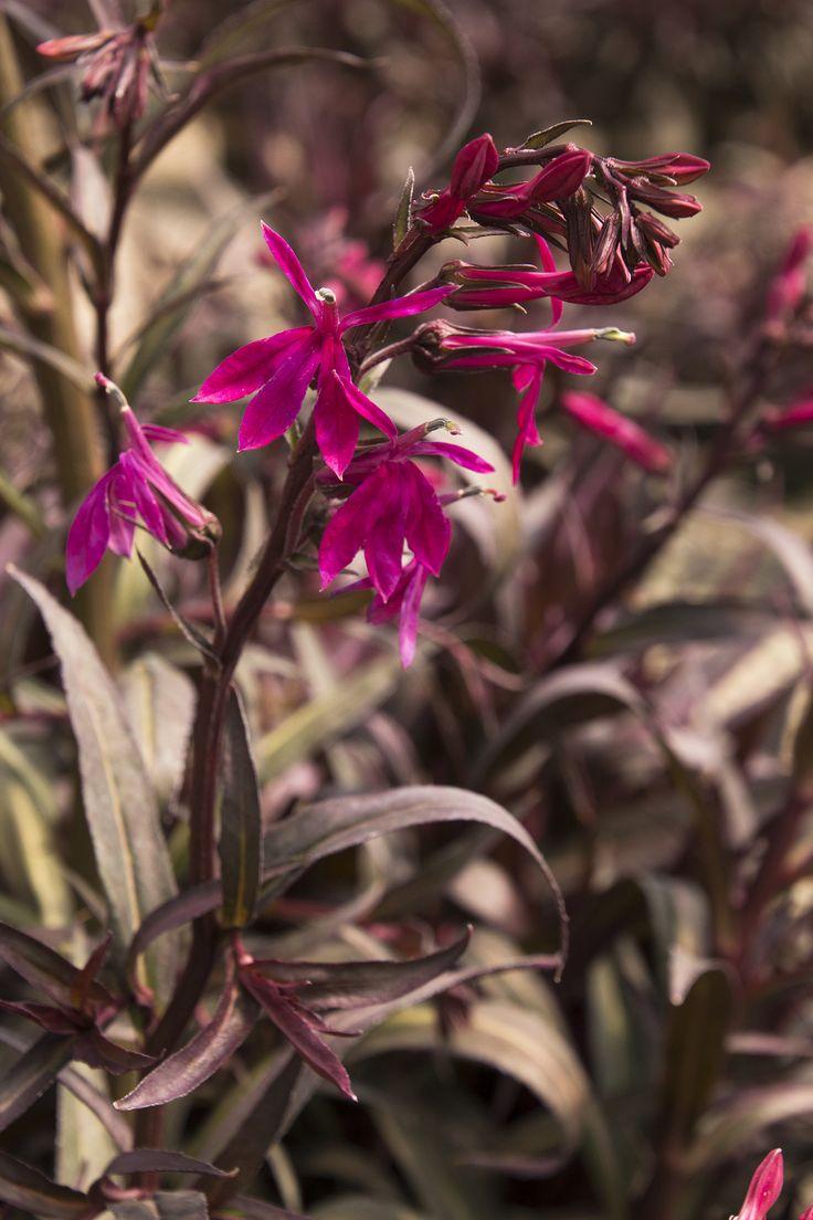 196 best plant ideas images on pinterest | garden plants, flower