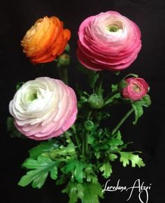 sugar ranunculus, they look so real!