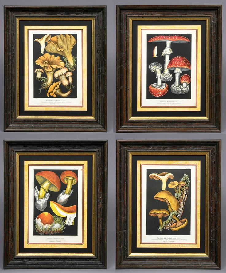 """Set Four Framed Mushroom Chromolithographs, Circa 1890 """"Les Champignons Comestibles et Les Especes Veneneuses."""" Mushrooms drawn from nature by Fritz Leuba.Mycology is the study of fungi, including their genetic and biochemical properties. Hand-painted double-mount. Handmade creased silk frame with 22 carat gold leaf sight edge. French Circa 1890 Height: 21"""" 