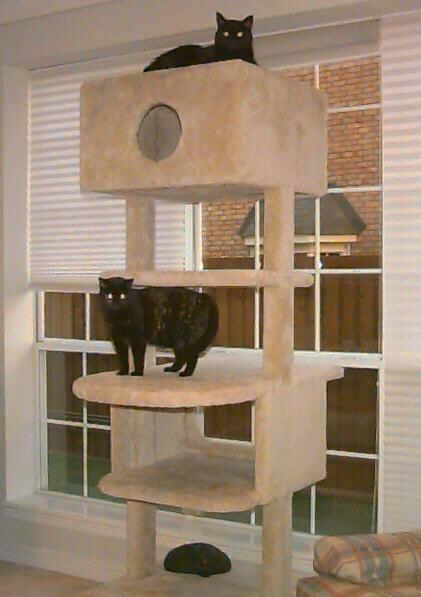 25 best ideas about homemade cat tower on pinterest for How to make a cat tower