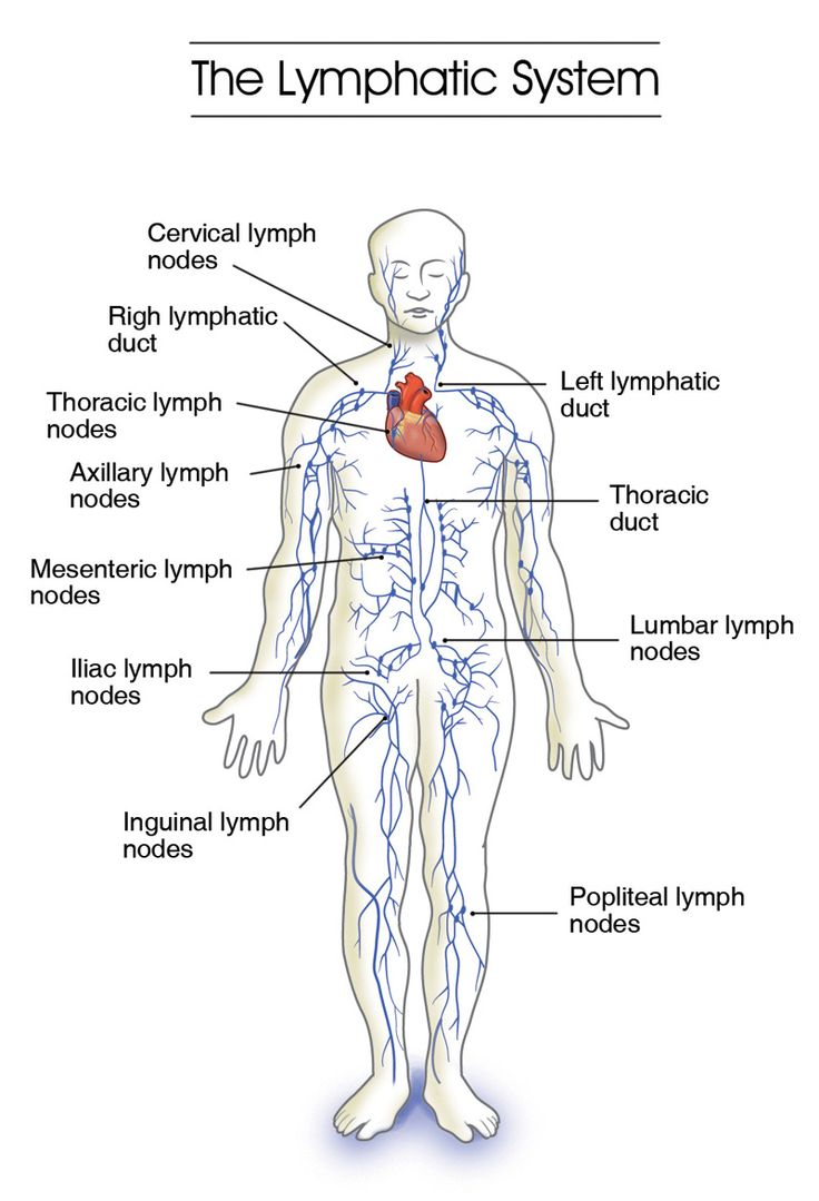 Labeled       Diagram    Of The    Lymphatic       System        Labeled       Diagram    Of The    Lymphatic       System    Please Dont