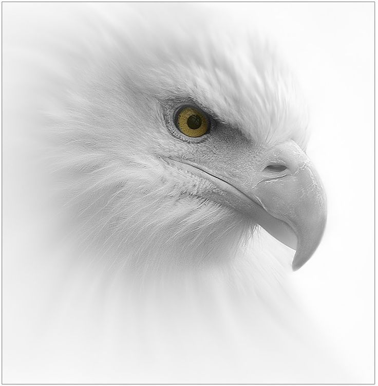 clint newsham's Image Gallery - Digital Photographer