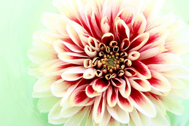Fototapeta Vzor Květu 3133 | Fototapety Květiny a Rostliny | TAPETYMIX