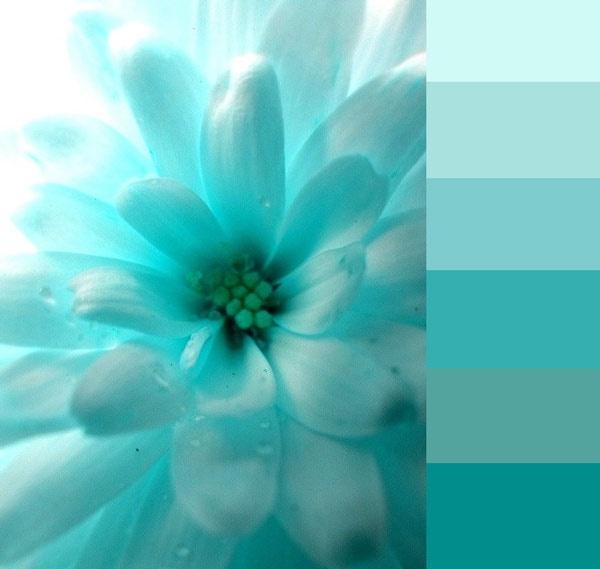 aqua flower dreamer wallpapercyan - photo #8