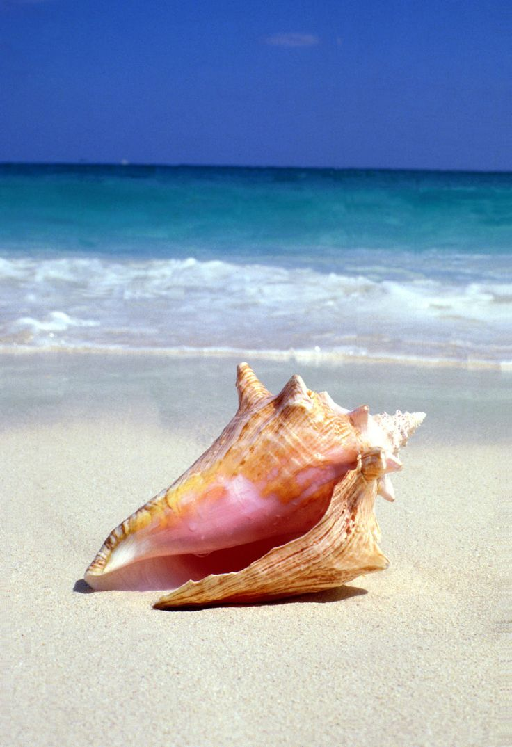 Destination: Turks and Caicos  Specialty: Conch shell massage. Hand-crushed queen conch shells mixed with aromatherapeutic oil makes for a gentle body scrub that gently polishes the skin.