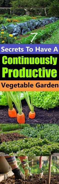 Best 25+ Raised gardens ideas on Pinterest   When to plant ...