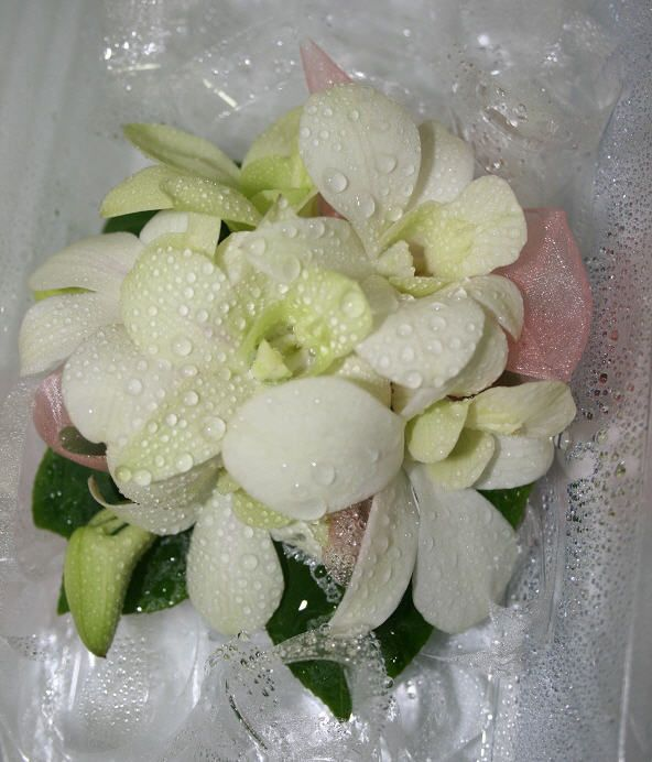 Fresh white orchids with coral ribbon