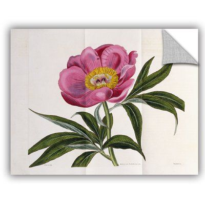 """ArtWall William Curtis Illustration Number 2264 Wall Mural Size: 18"""" H x 24"""" W x 0.1"""" D"""
