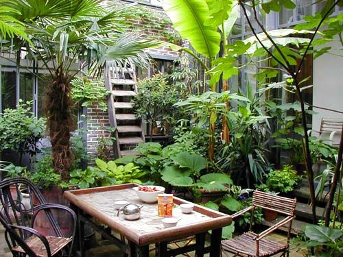 Best 20 Tropical Patio Ideas On Pinterest Tropical Backyard Outdoor Potted Plants And