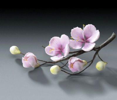 .vd fiori ciliegio  tuto
