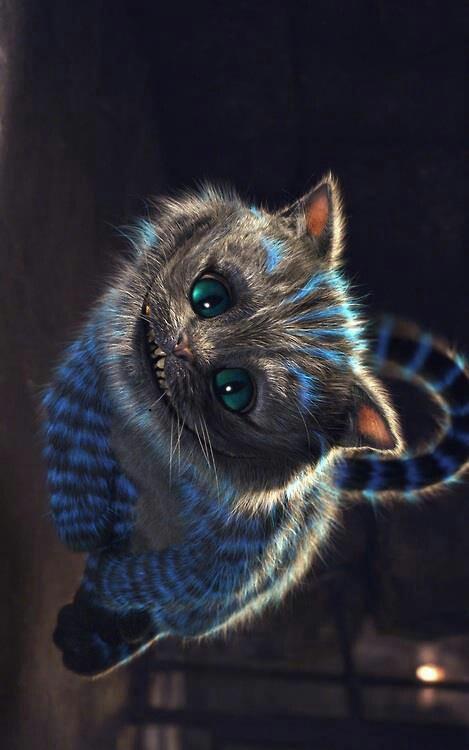 I love Cheshire the cat more then owls #gunsnposies #inspiration #aliceinwonderland