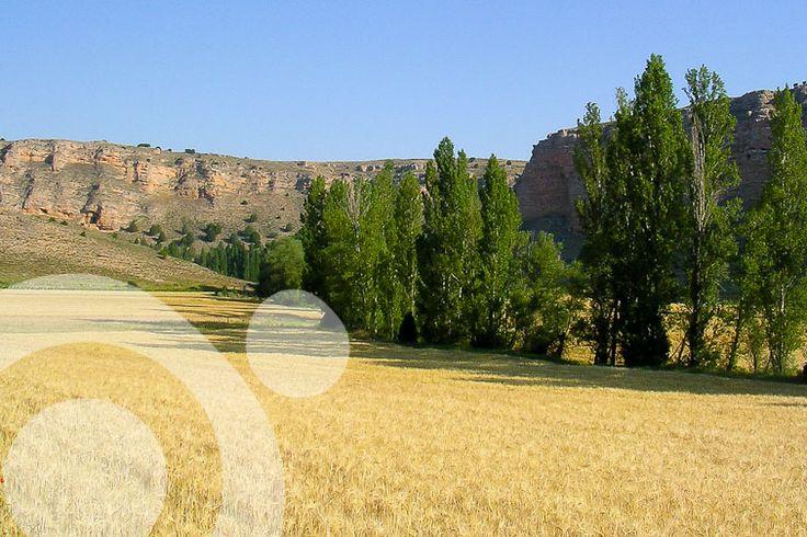 Near #Montejo_de_la_Vega.  Find all the information to plan your trip to #Hoces_del_Riaza in www.qnatur.com