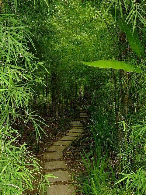 Bamboo trail in Bali, Indonesia