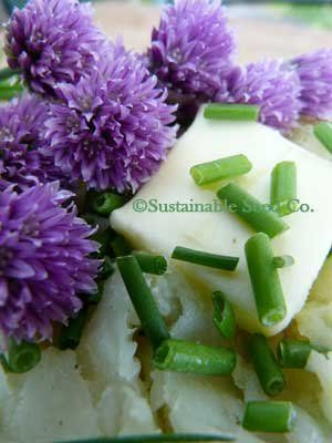 Organic Chive Seeds 14 LB 28000 seeds >>> Check out the image by visiting the gardening link.