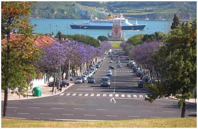 Jacarandás.  Restelo - Lisboa - Portugal
