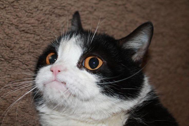 pokey a ww its grumpy cat s brother i big fat cats