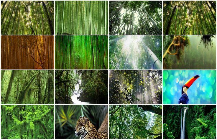Dans l'Union Européenne, la normalité suit son cours, peu d'efforts pour enrayer la perte de la biodiversité... - http://www.blog-habitat-durable.com/dans-lunion-europeenne-la-normalite-suit-son-cours-peu-defforts-pour-enrayer-la-perte-de-la-biodiversite/